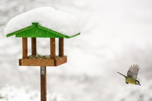 Températures négatives: pensez aux oiseaux